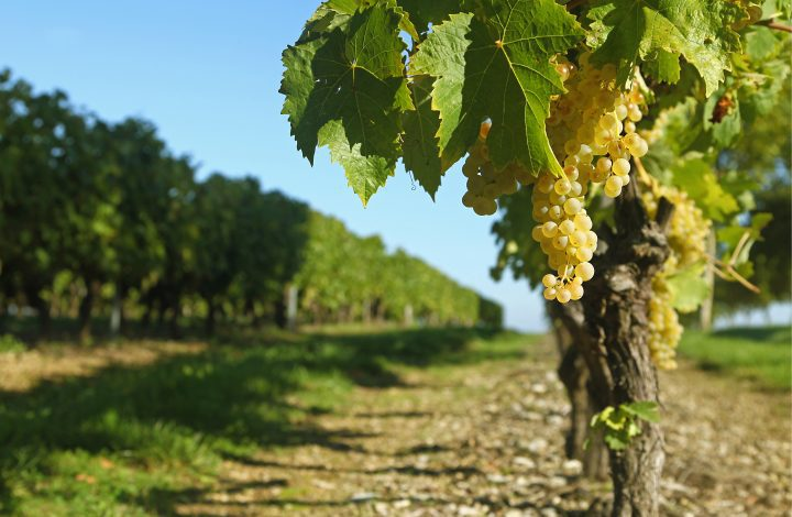 actualité-viticulteur-cognac