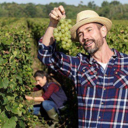 stratégie-d'entreprise-viticulteur
