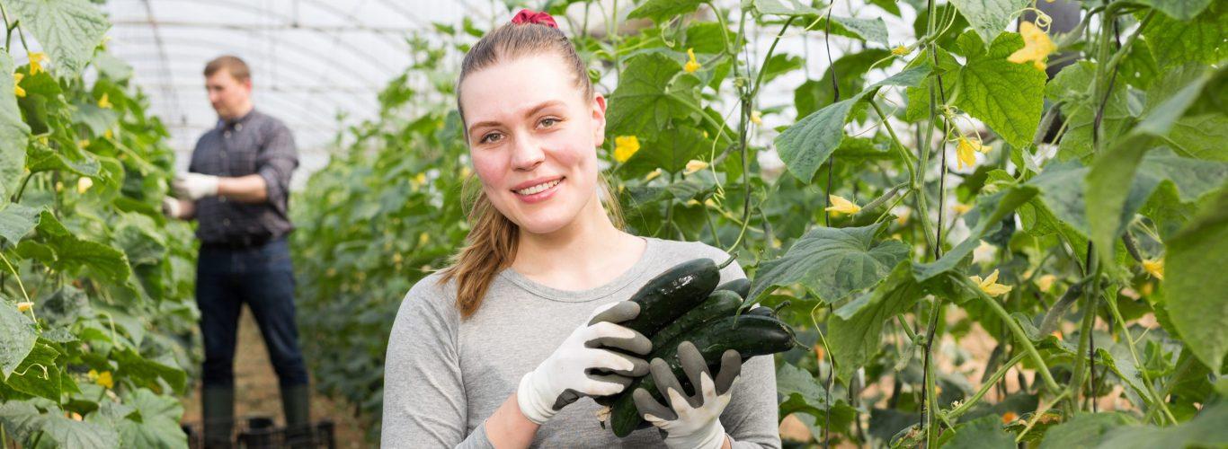bulletins-fiche-de-paie-conseil-social-agriculteur