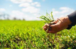 champ-agriculture-groupement-foncier-agricole